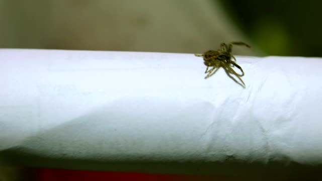 Venomous spider climbing up to the edge of the paper. video