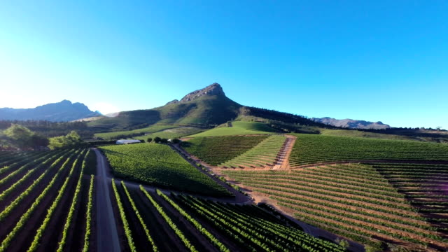 Verdant vineyards video