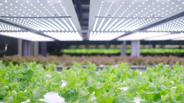 vertical farming offers a path toward a sustainable future - sustainability video stock e b–roll