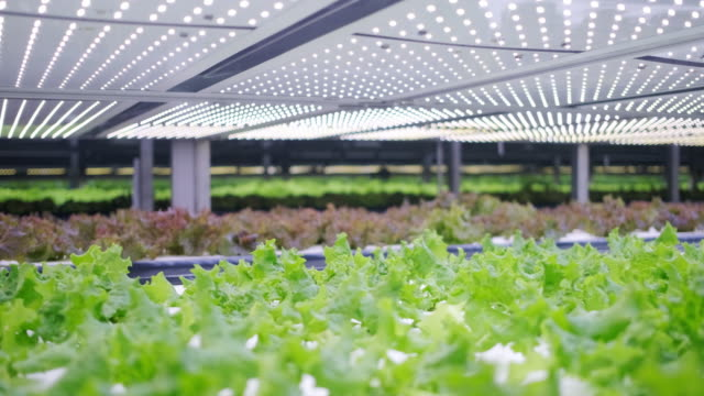 Vertical Farming Offers a Path Toward a Sustainable Future