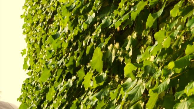 vídeos de stock e filmes b-roll de vertical green facade wall panning, green building - ivy building