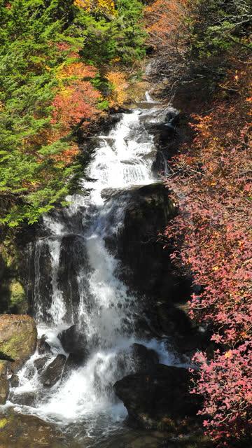 vertikal japan vattenfall med höstlöv färg - vertikal bildbanksvideor och videomaterial från bakom kulisserna
