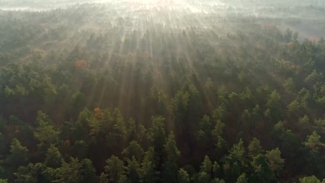 Very atmospheric morning during sunrise. Camera moving above foggy forest. Sun rays getting through shining everywhere. Aerial shot, UHD Very atmospheric morning during sunrise. Camera moving above foggy forest. Sun rays getting through shining everywhere. Aerial shot, UHD scandinavia stock videos & royalty-free footage