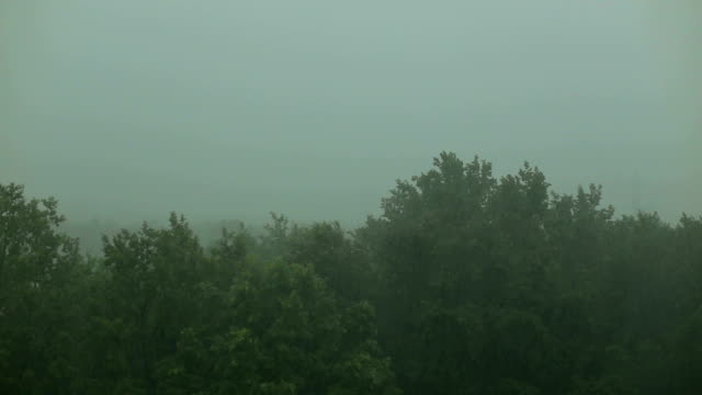 Very heavy rain in forest with lightning and wind. video