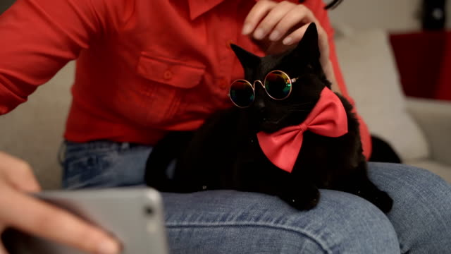 Very very funny cat with eyeglasses and bow tie video