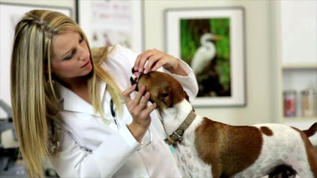 vídeos y material grabado en eventos de stock de veterinario con perro de comprobación - veterinario