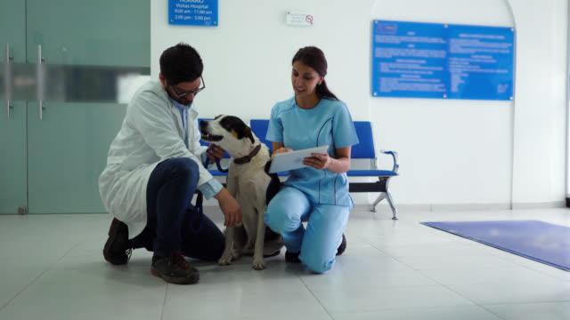 vet kontroll blandad föda hund fördriva tiden assistenten tar anteckningen på tavlan - veterinär, undersökning bildbanksvideor och videomaterial från bakom kulisserna