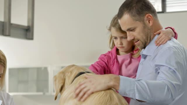 Vet Examining A Dog's Paw video