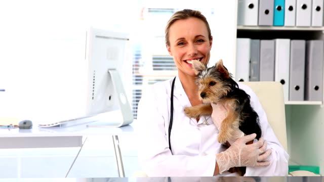 Veterinario sosteniendo un terrier de yorkshire - vídeo