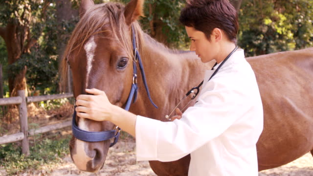 Vet taking care of a horse video