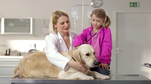 Veterinarian And Little Girl Using A Stethoscope video