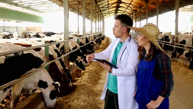 Veterinarian chatting with farmer Veterinarian chatting with farmer rancher stock videos & royalty-free footage