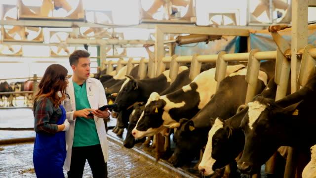 ветеринарный чат с фермером - животноводство стоковые видео и кадры b-roll