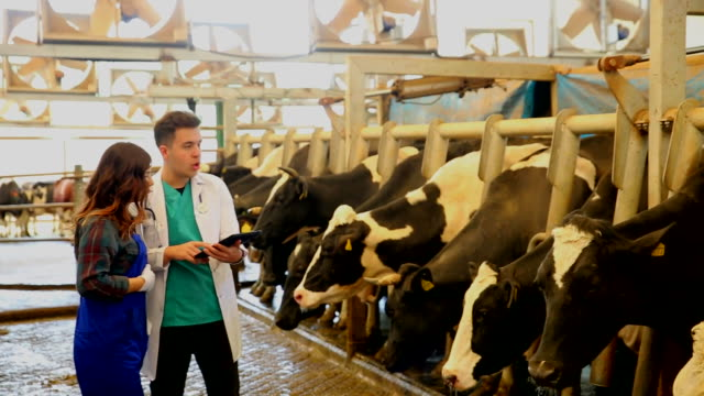 vídeos de stock e filmes b-roll de veterinarian chatting with farmer - rancho quinta