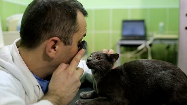 獣医検査美しいロシアの青猫の目 - ネコ科点の映像素材/bロール
