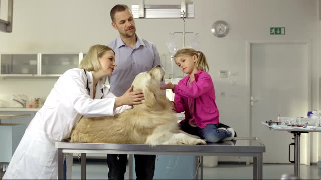 Veterinarian Examining A Family Dog video