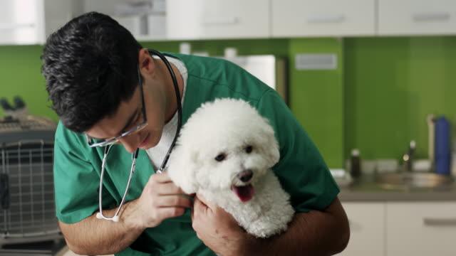 獣医師の小さな犬を調べる - ビションフリーゼ点の映像素材/bロール