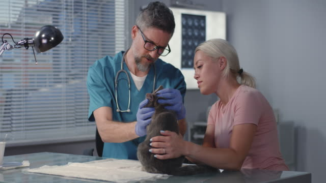 Veterinarian examining cat Medium shot of male veterinarian examining cat with its master veterinarian stock videos & royalty-free footage