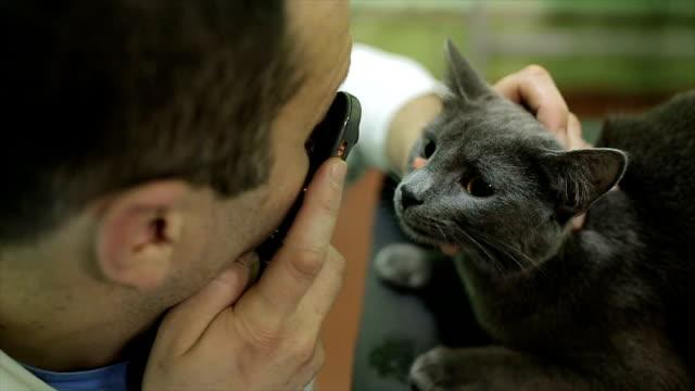 Veterinarian examining eyes of a cat while doing checkup at clinic