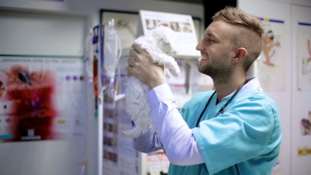 Veterinarian holding cute puppy video
