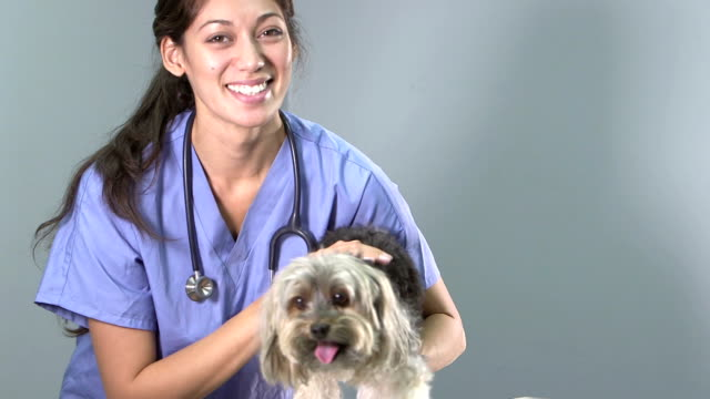 Veterinarian petting dog on exam table video