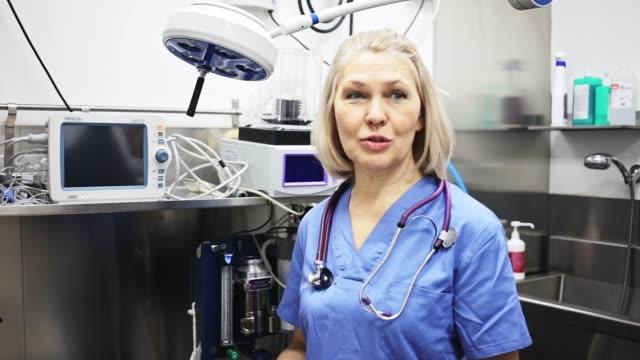 veteriner kliniğinde konuşan veteriner - kısırlaştırma stok videoları ve detay görüntü çekimi