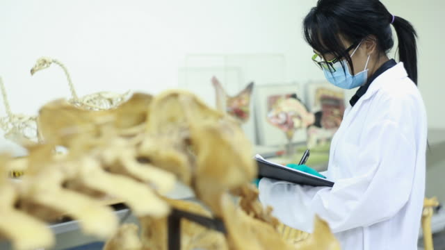 Veterinarian Veterinarian examining animal skeleton animal skeleton stock videos & royalty-free footage