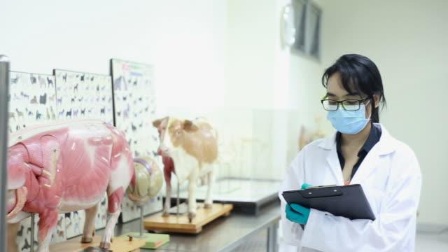 Veterinarian video