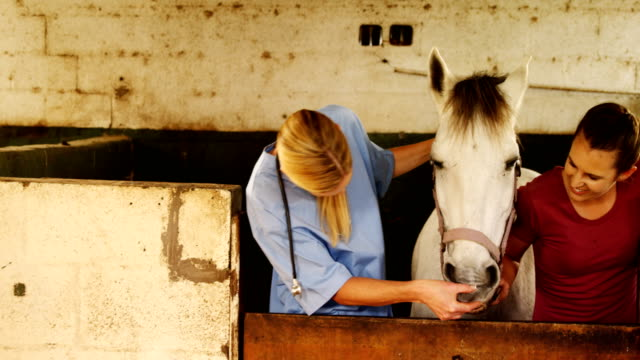Veterinary examining horse mouth 4k video