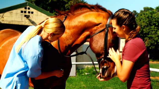vídeos y material grabado en eventos de stock de veterinaria examen de caballo con estetoscopio 4k - veterinario