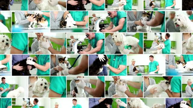 獣医ます。ビデオウォールます。 ビデオ