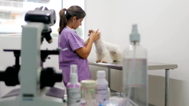 Veterinary Visit In Clinic With Vet And Sick Dog video