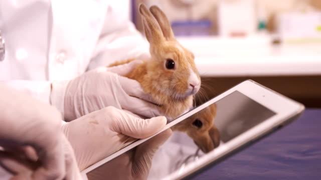 veterinärer använder en surfplatta - veterinär, undersökning bildbanksvideor och videomaterial från bakom kulisserna
