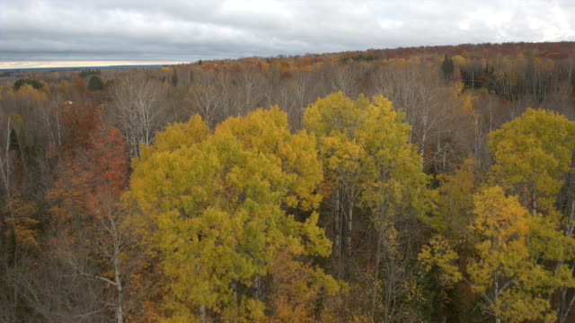 AERIAL Vibrant fall foliage birch trees in forest near country house and highway video