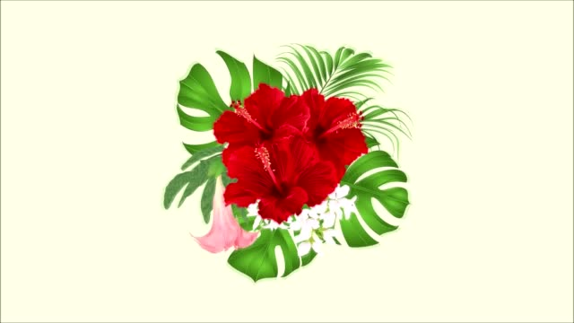 Video animation seamless loop bouquet with tropical flowers  floral arrangement,  red hibiscus, palm,philodendron and Brugmansia
