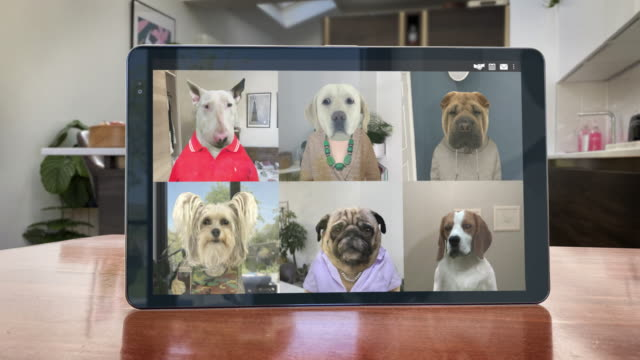 vídeos de stock e filmes b-roll de video app conference call - six dogs catch up - looping video - pets