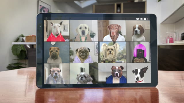 Video App Conference Call - Twelve Dogs Catch Up - Looping Video Colleagues and friends at home and abroad catch up on a group chat. Business and pleasure, and they happen to be dogs. Animated working from home. A productive, good quality call.   Loops fully and seamlessly. purebred dog stock videos & royalty-free footage