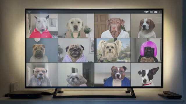 Video App Conference Call - Twelve Dogs Catch Up on Big Screen - Looping Video