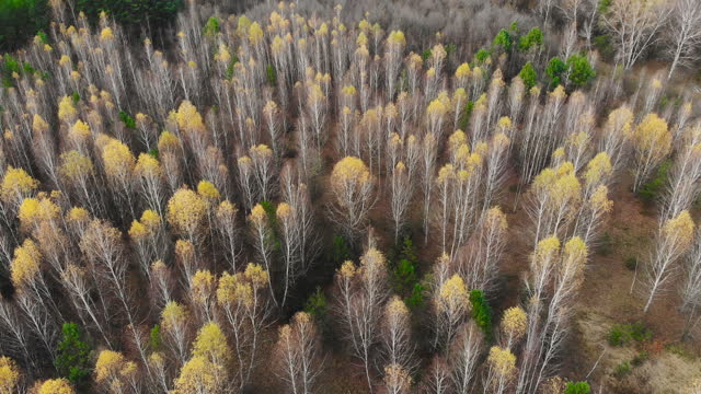 Video clip of the autumn forest filmed with a drone. video