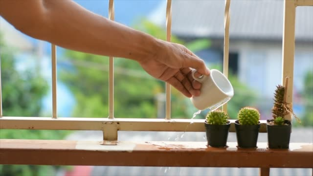 Video clip slow motion man holding bottle is watering a cactus blurred tree background
