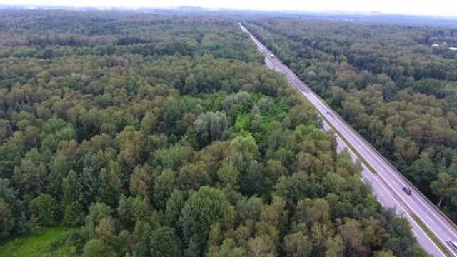 Video drone aerial view over the road in the forest on the way to north of Poland. video