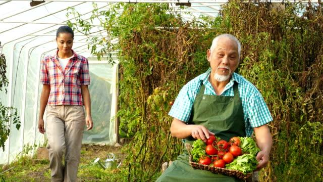 4K Video Family harvesting vegetables from garden video
