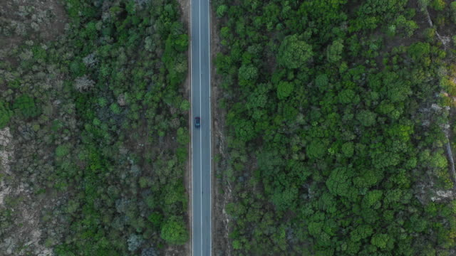 video from above, aerial view of a car passing by a road lined with rich green vegetation. - sardegna video stock e b–roll