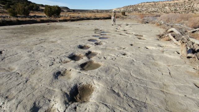 hd video hiker and dinosaur tracksite colorado - dinosaur stock videos and b-roll footage