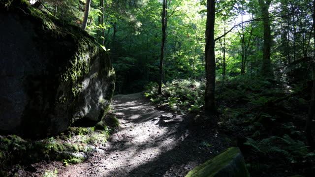 4k video pov av hiker promenader och utforska skogen - liten skog bildbanksvideor och videomaterial från bakom kulisserna