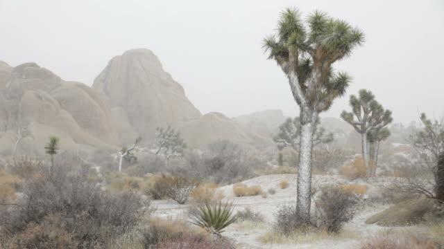 hd ビデオモハベ砂漠ブリザードジョシュアツリー国立公園が、カリフォルニア州 - ジョシュアツリー国立公園点の映像素材/bロール