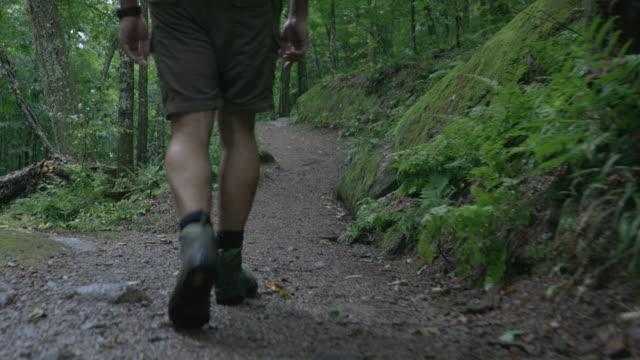 歩くと雨の日に森を探索人ハイカーの 4 k 映像 - 後に続く点の映像素材/bロール