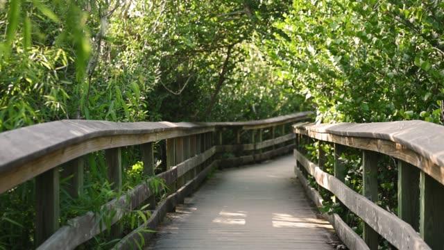 Video of Boardwalk Trail Through Everglades National Park Landscape in Florida  USA