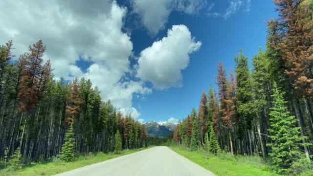 4K POV Video of Car driving on Empty highway in Jasper National Park, Canada
