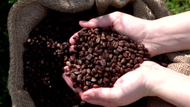 video di controllare chicchi di caffè in real al rallentatore - coffee farmer video stock e b–roll